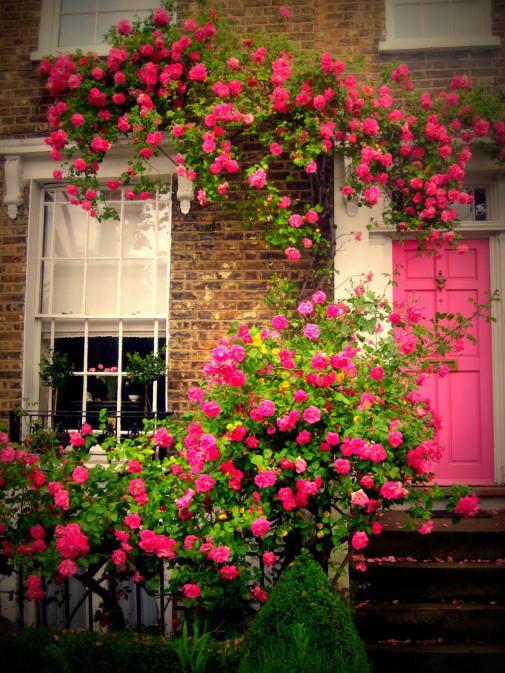 Grm ruže