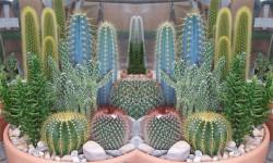 Kaktusi aranzman