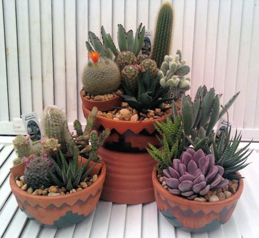 Kaktusi sa kamenicama