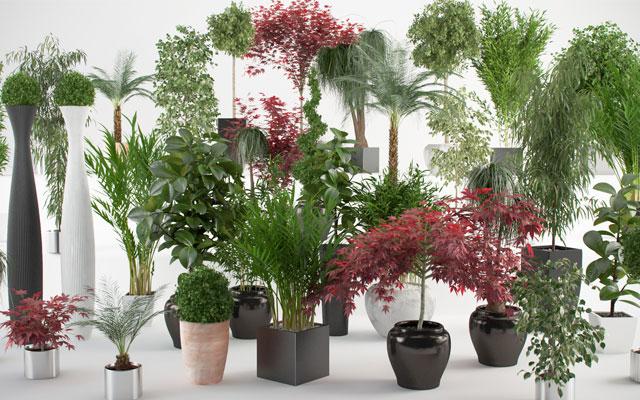 Saksijske biljke u kući