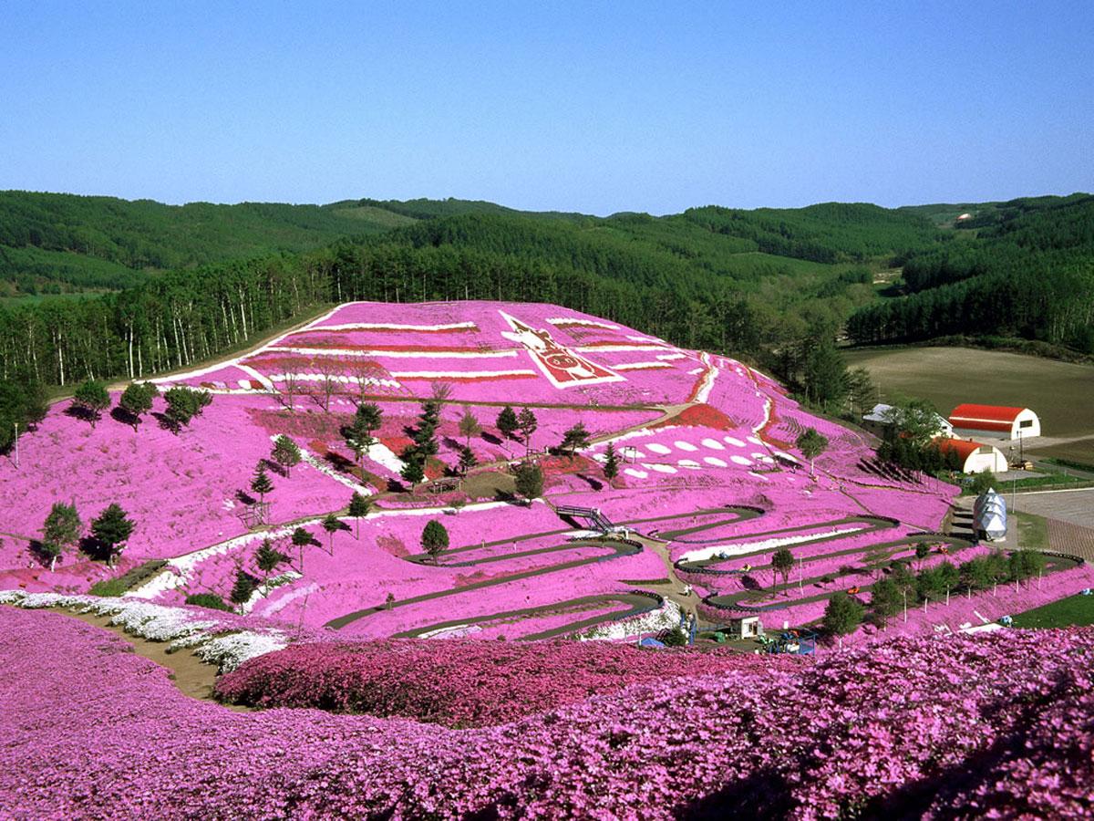 Jedinstven na svetu-japanski cvetni park   BravaCasa Magazin