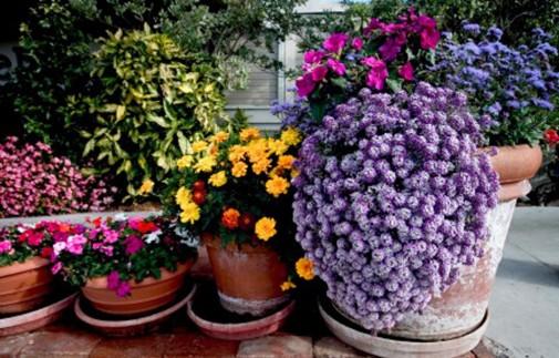 Saksijsko cveće