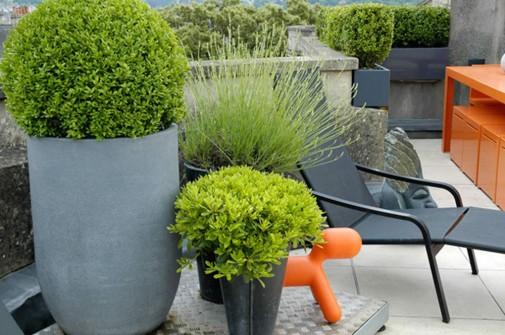 Biljke na krovnoj bašti