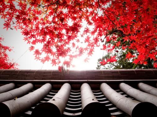 Kjoto-slika-1