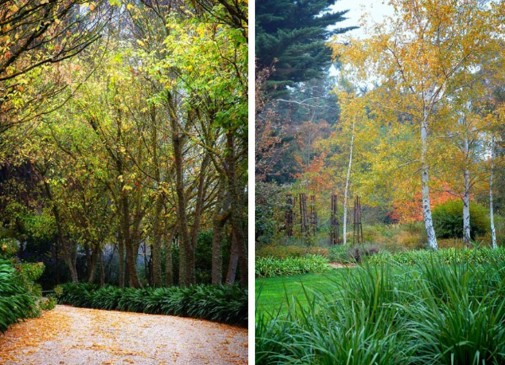 Razno drvece i biljke