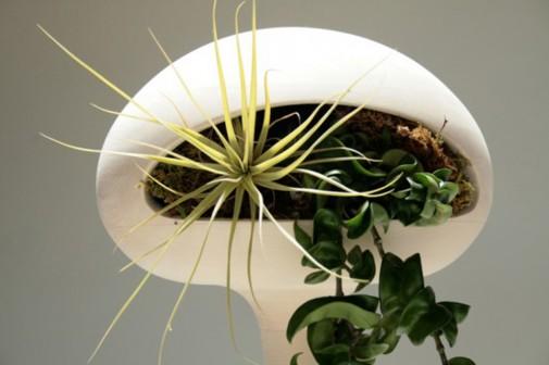 Sobne biljke koje prečišćavaju vazduh   BravaCasa Magazin