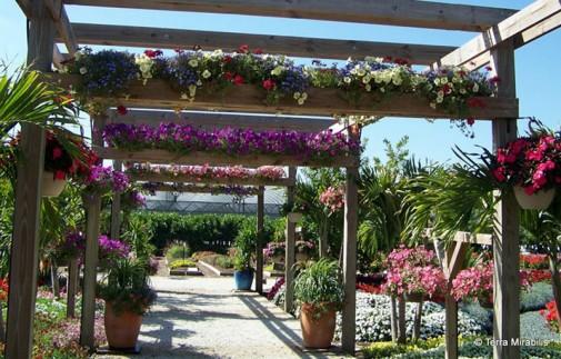 Cveće na pergoli
