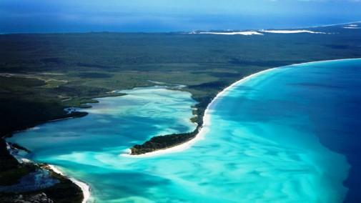Bujna vegetacija ostrvske prašume