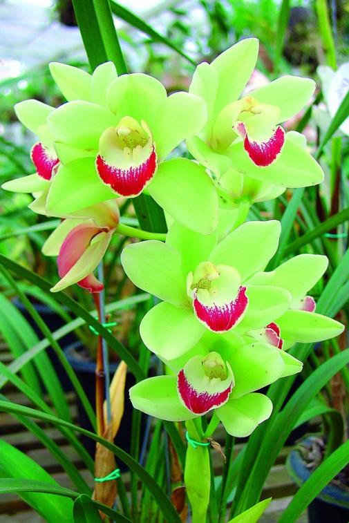 Orhideja slika 2