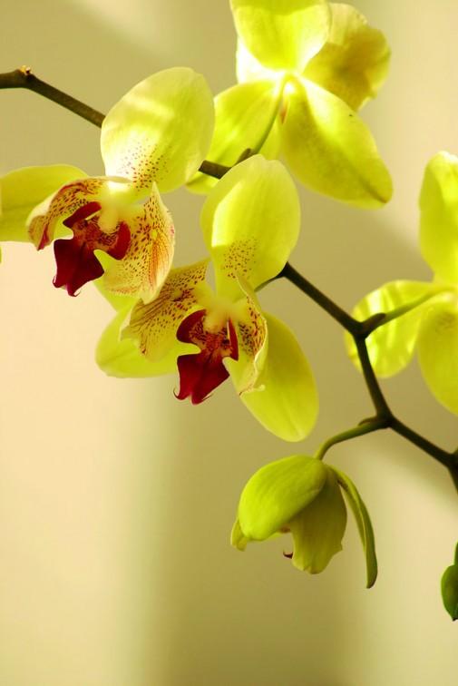 Orhideja slika 3
