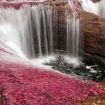 Kanjo kristales – najlepša reka na svetu