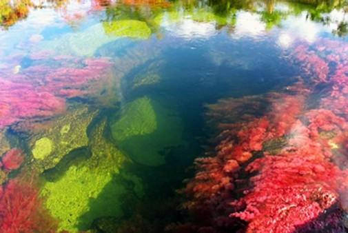 Kanjo kristales – najlepša reka na svetu slika4