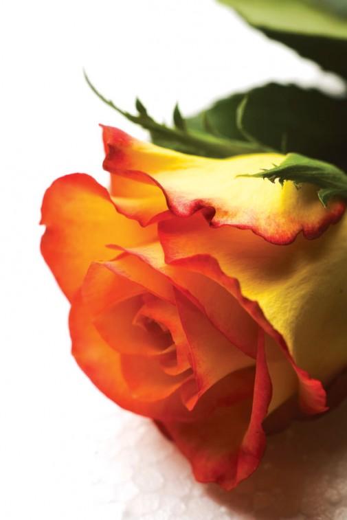 Naran žuta