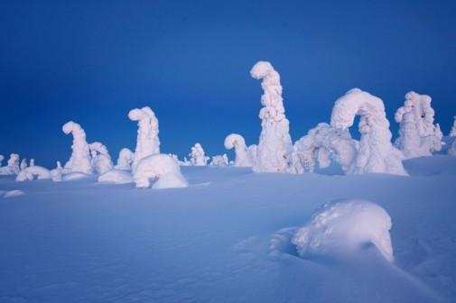 Zamrznuto drveće slika 2