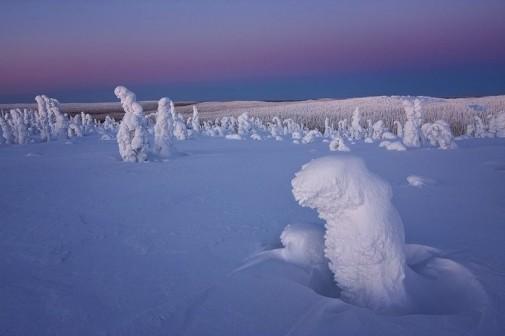 Zamrznuto drveće slika 4