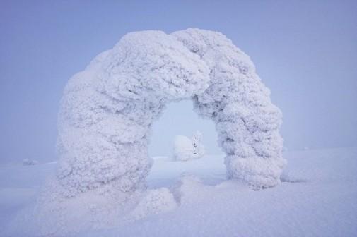 Zamrznuto drveće slika 5