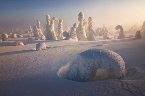 Zamrznuto drveće slika 6