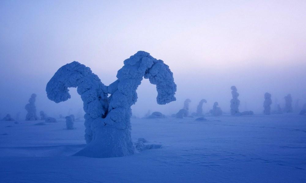 Zamrznuto drveće