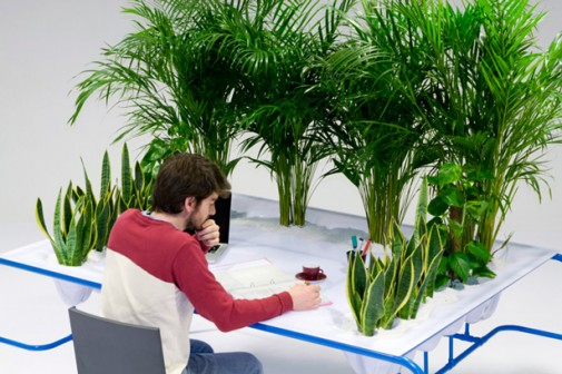 Personalni mali vrt na radnom stolu slika 4