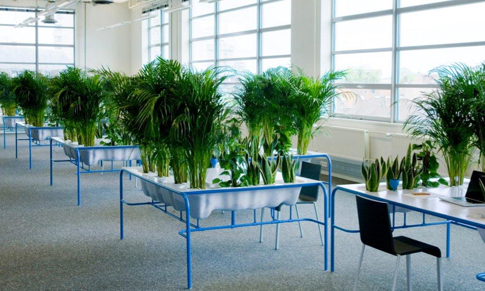 Personalni mali vrt na radnom stolu