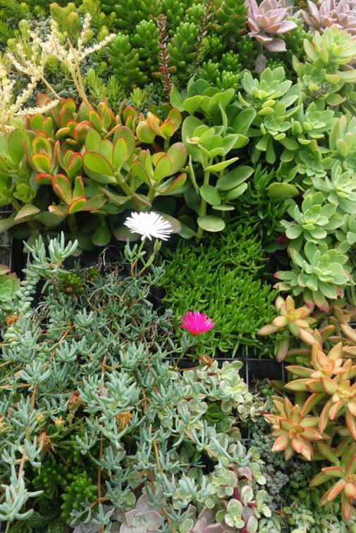 Vertikalni vrt i kupanje slika 2