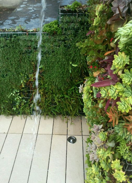 Vertikalni vrt i kupanje slika 5