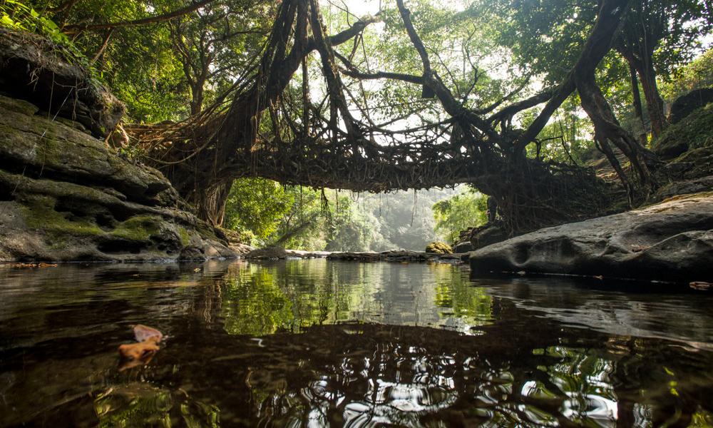 Mostovi od korenja slika Naslovna