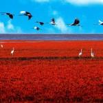 Crvena polja u Kini