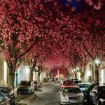 Cvetanje u Bonu