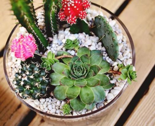 Kaktusi slika2