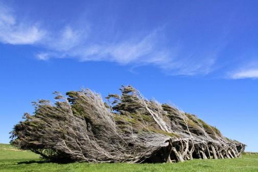 Slope Point Novi Zeland slika 4