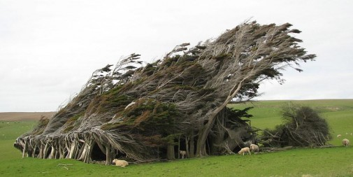 Slope Point Novi Zeland slika 5
