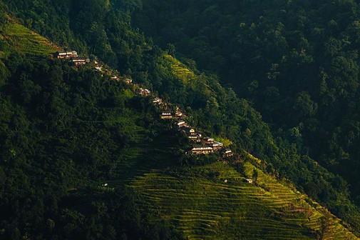 Tradicionalno skupljanje meda u Nepalu slika 2