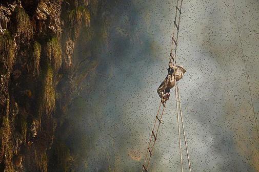 Tradicionalno skupljanje meda u Nepalu slika 3