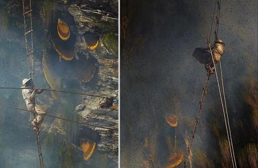 Tradicionalno skupljanje meda u Nepalu slika 5