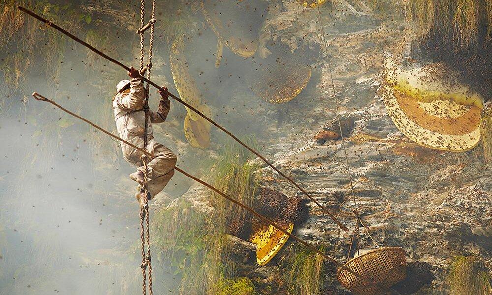 Tradicionalno skupljanje meda u Nepalu