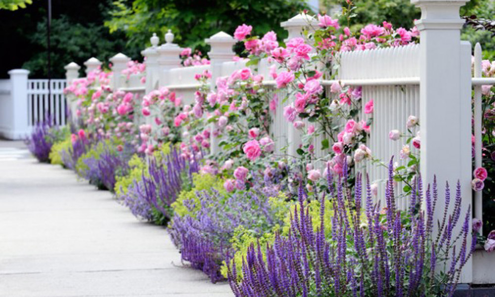 Cveće na ogradama