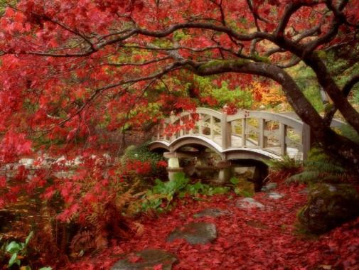 Japanski vrtovi slika 6