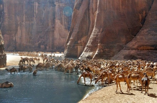 Oaza Guelta d'Archei slika 6