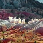 Kanjon gde rastu džinovski borovi