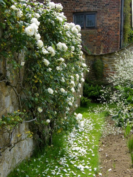 Zid od cveća slika3