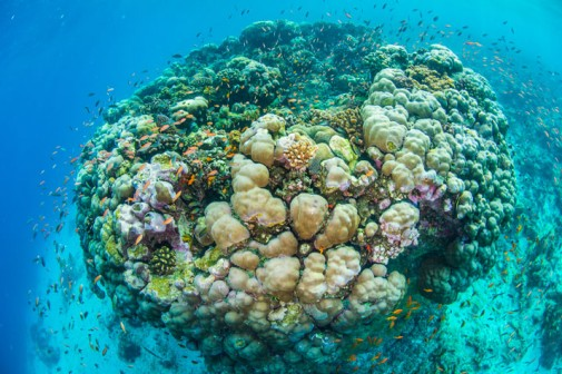 Neverovatna podvodna soba slika 4