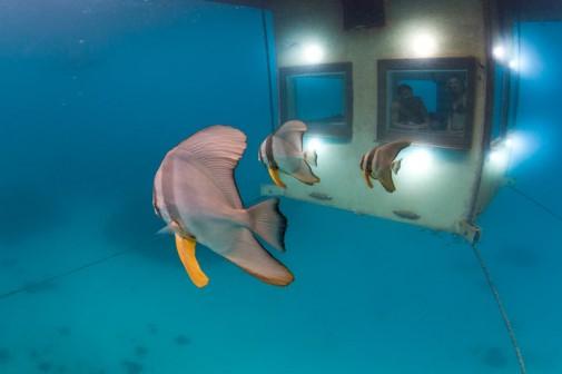 Neverovatna podvodna soba slika 7