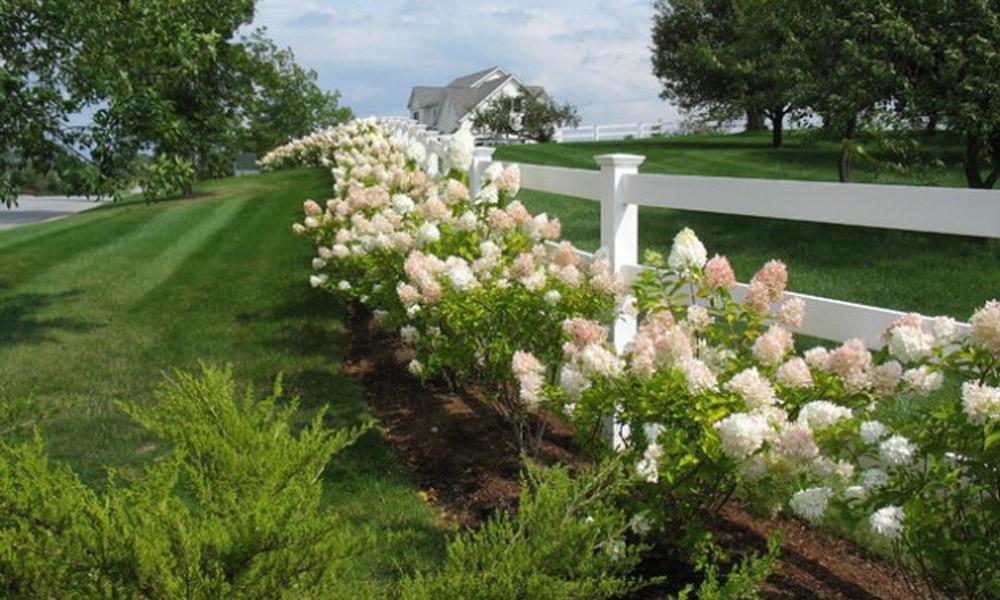 Cveće – predivan dodatak ogradi vaše bašte ili balkona