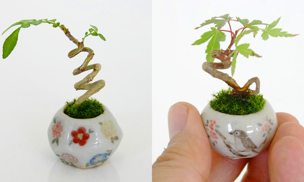 Magija minijaturnog bonsaija