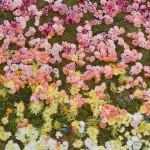 Predivni cvetni zidovi