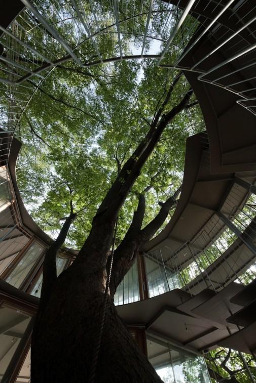 Objekat oblikovan oko drveta 4